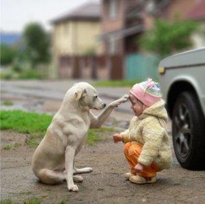 dogbud